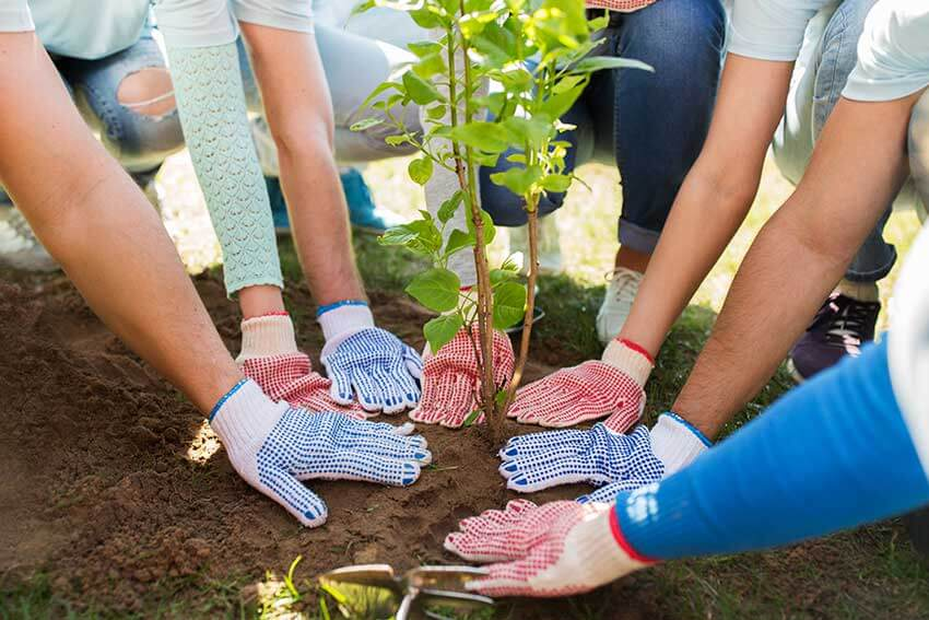 teamio pflanzt 250 Bäume durch Teamevents mit Mehrwert